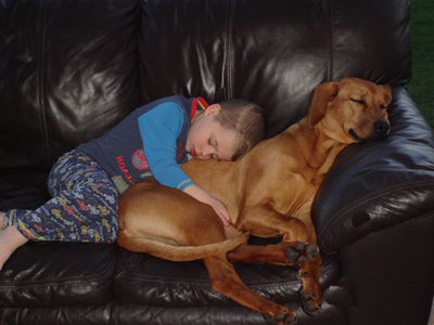 Living with Ridgeback dogs