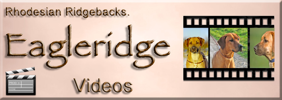 Eagleridge Ridgeback videos
